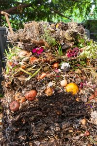 komposter test kompost duenger
